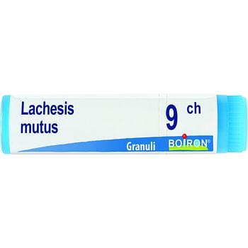 Lachesis mutus 9ch globuli