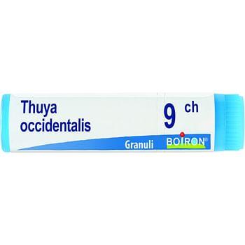 Thuya occidentalis 9 ch globuli