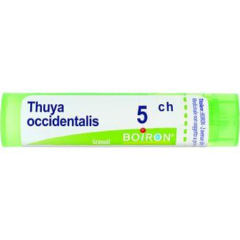 Thuya occidentalis 5 ch granuli