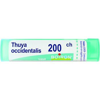 Thuya occidentalis 200 ch granuli