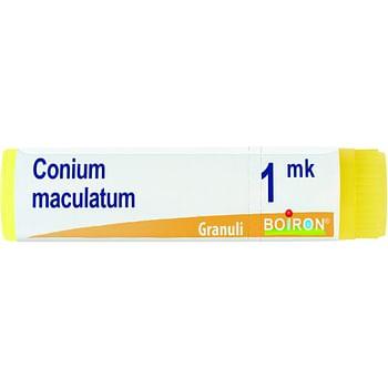 Conium maculatum mk globuli