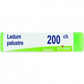 Ledum palustre 200ch globuli