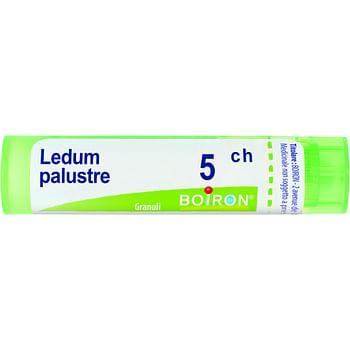 Ledum palustre 5 ch granuli