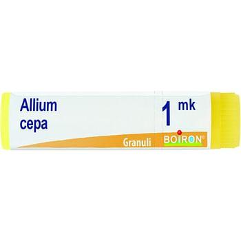 Allium cepa mk globuli
